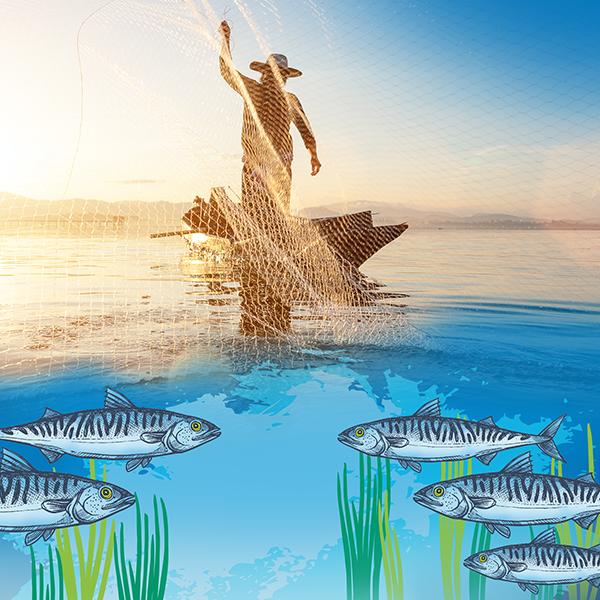 Vavel ryby w słoikach